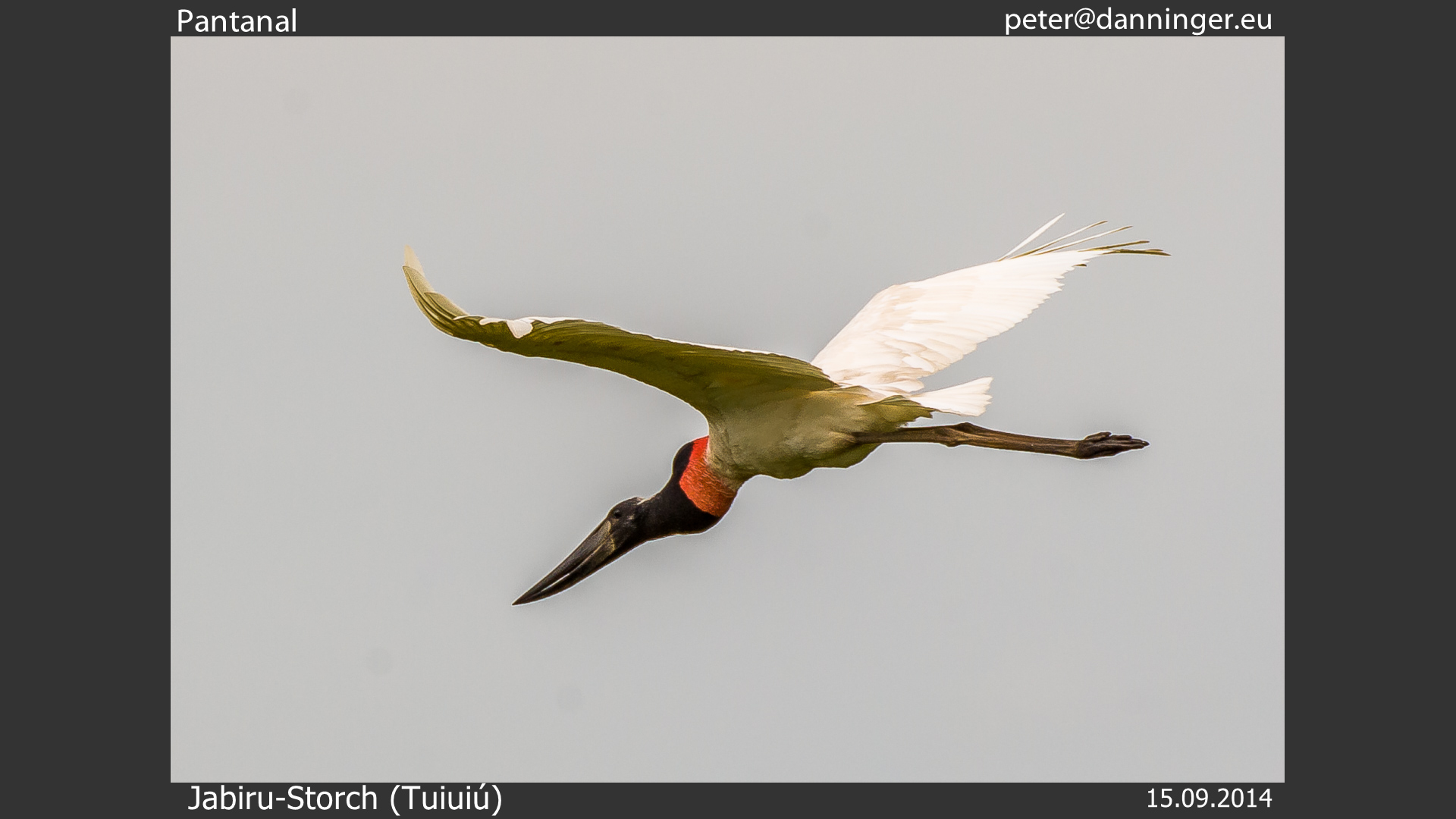 Slide Show Of Some Of My Bird Photos >> Peter S Web Gallery Thumbnailshow And Slideshow